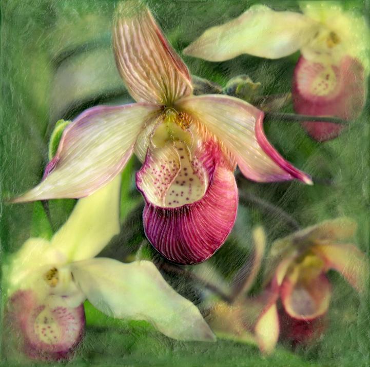Botanical IV   (NA)
