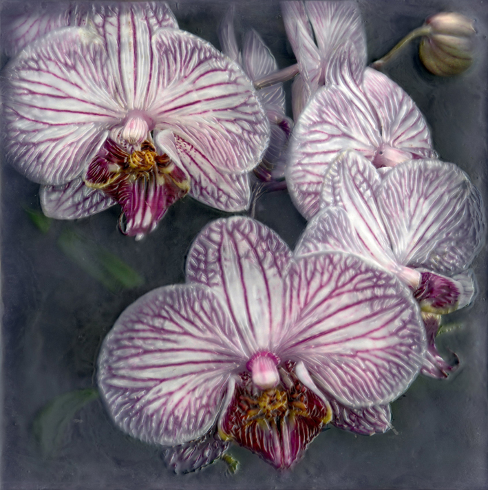 Botanical V   (NA)