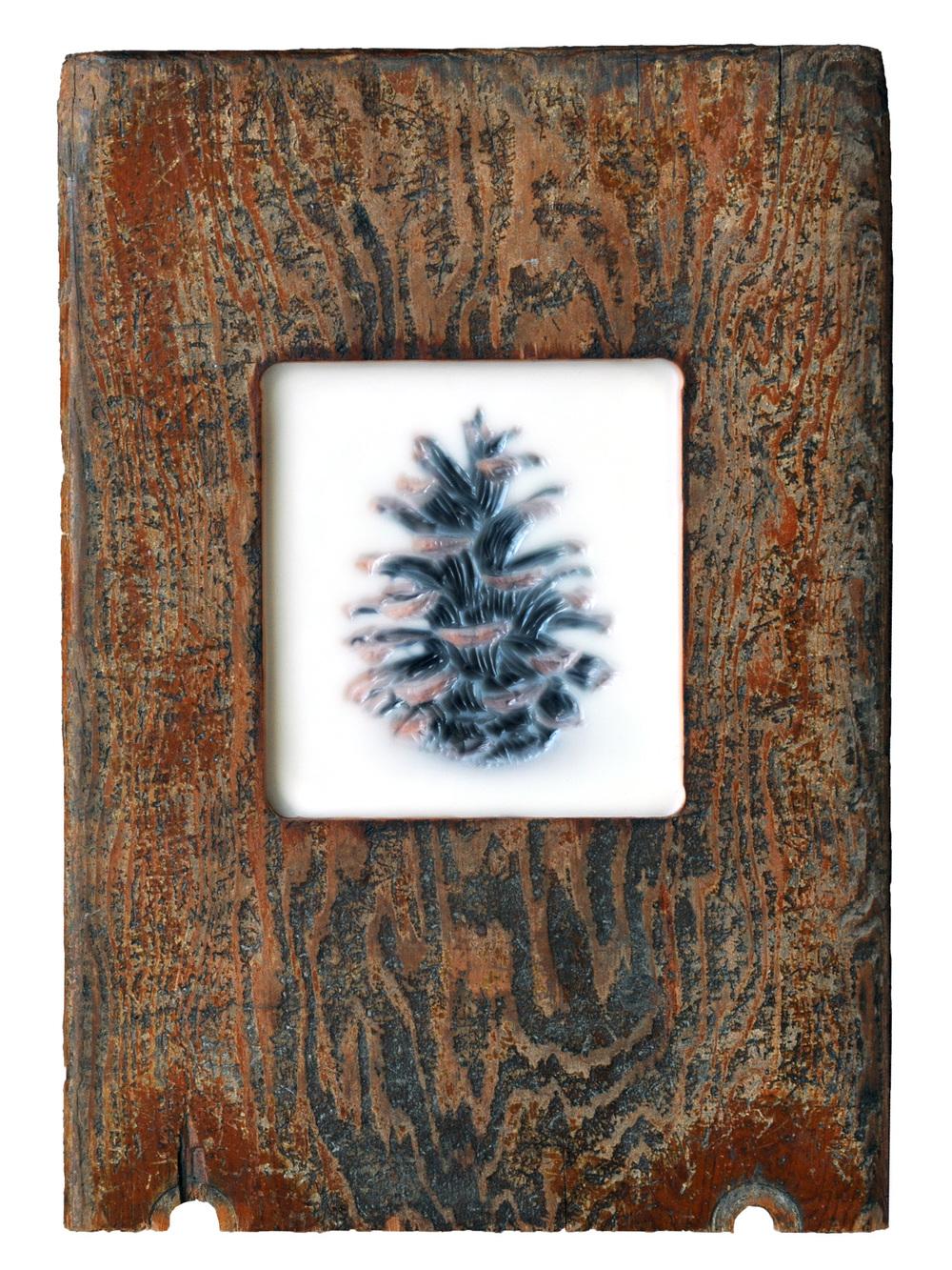 Pine Cone   (NA)