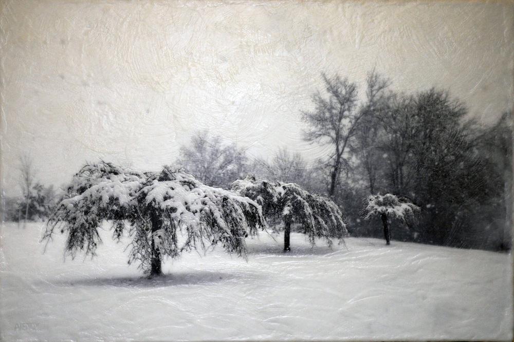 Como Trees I   (NA)