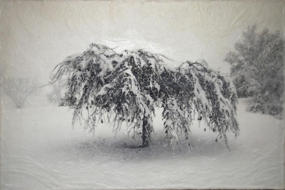 Como Trees II   (NA)