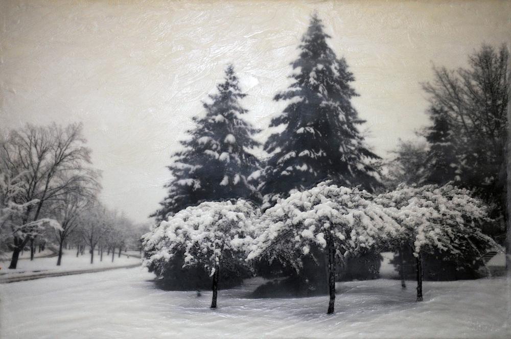 Como Trees III   (NA)