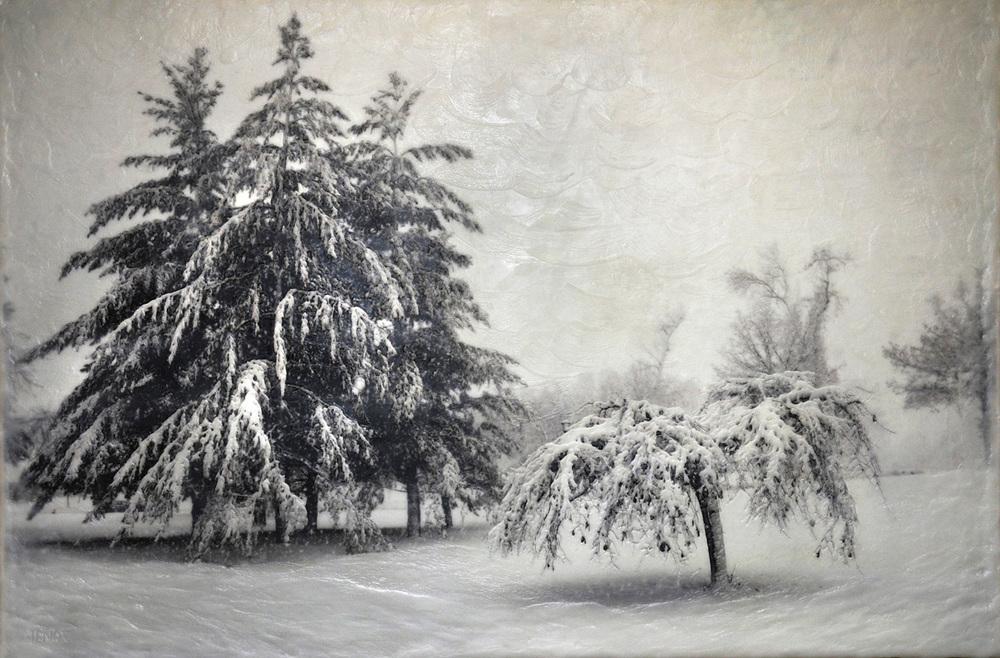 Como Trees IV   (NA)