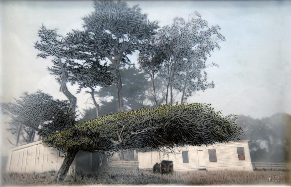 Swept Cypress   (11x16)