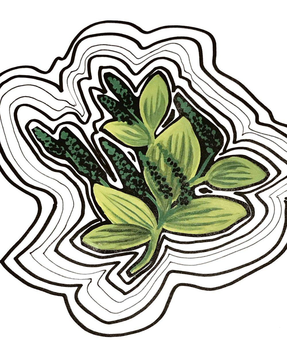 Leaf Ripple | HeatherRoth.com/experiments