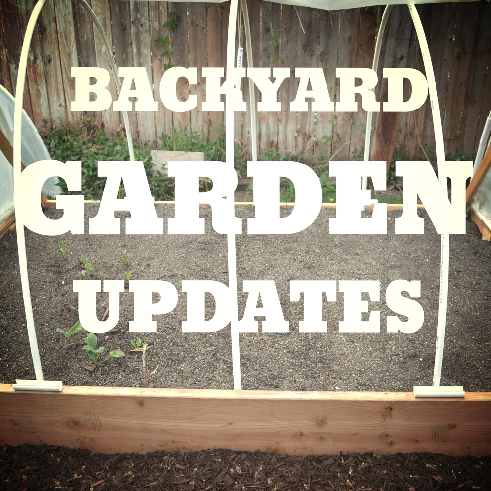 BackyardGardenUpdates