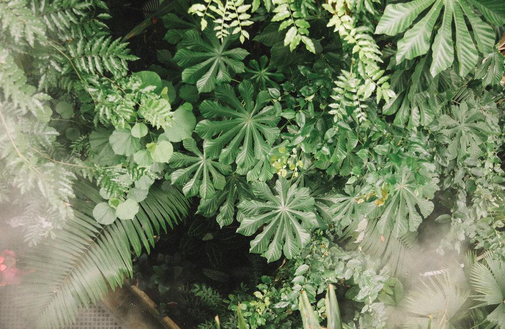 Kew Botanic Gardens