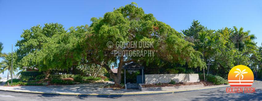 The Chart House Coconut Grove