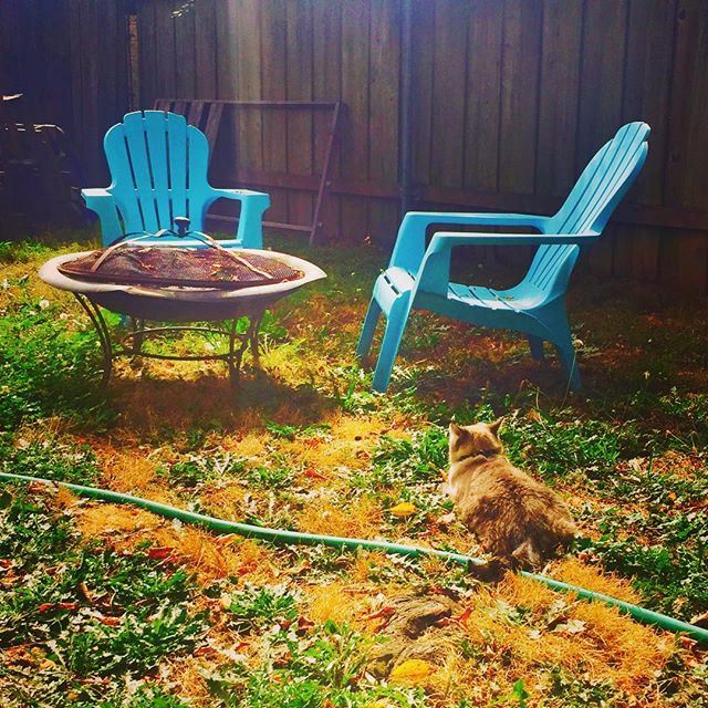 #catsofportland #oregon #latergram #kitty #cats and #blue #outdoor #furniture on #grass in #portland #thedreamofthe90sisaliveinportland