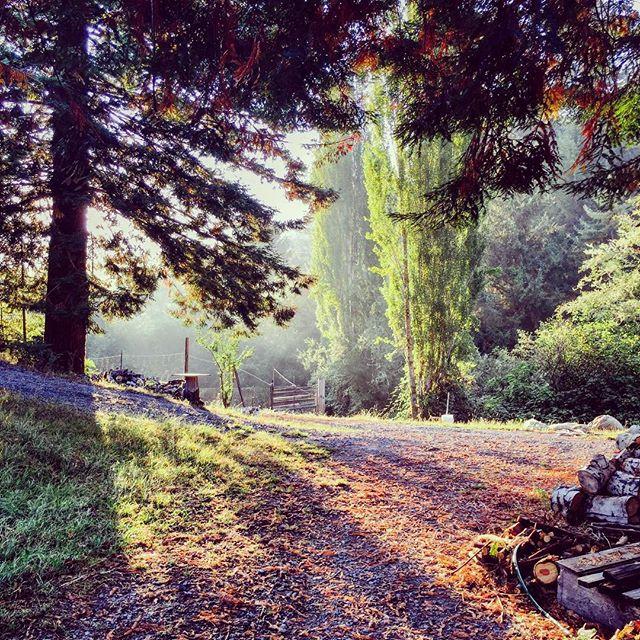 #goodmorning from the #appleorchard at #wrigleysapples #northerncalifornia #explorehumboldt #redwoods and some #poplar #gravel #woodpile #sunshine