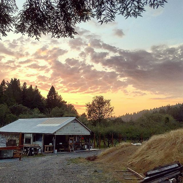 And a #goodevening to you #sunset over #appleorchard at #wrigleysapples in #humboldt county #northerncalifornia #explorehumboldt #applehouse under the #redwoods #cider is on the way... #craftcider #hardcider or just good #estatecider