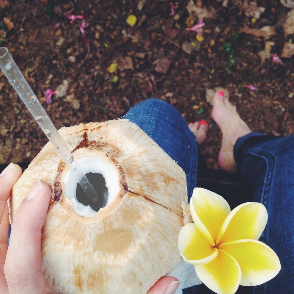 Fresh coconut water on the shores of the North Shore.