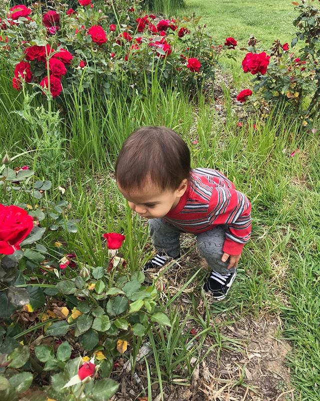 Teaching him to always stop and smell the roses  #naturebaby #sweetboy #redroses