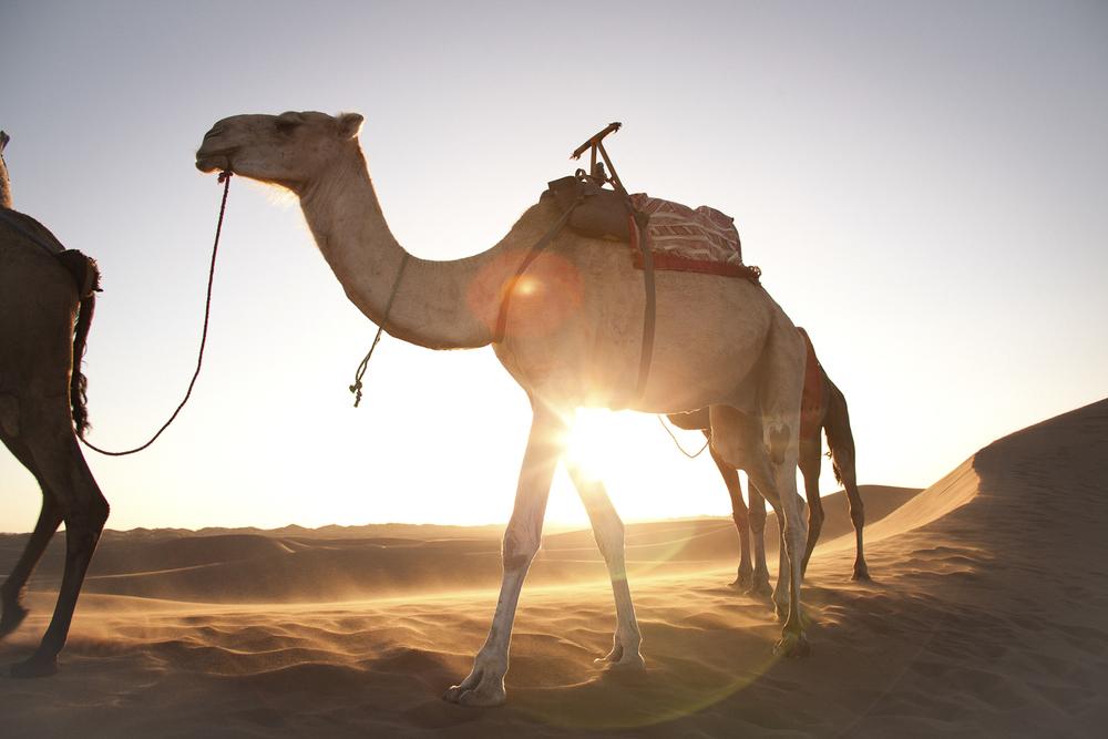 travel | sahara