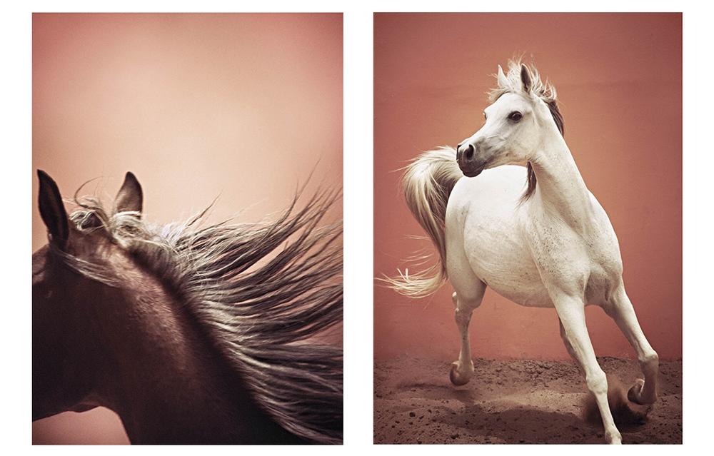 travel | arabian horses egypt