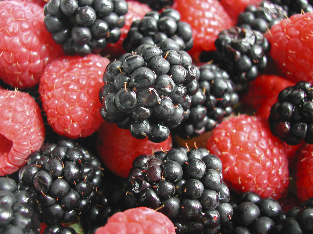 berries.jpg