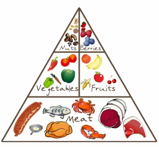 Paleo Food Pyramid 3 Million Years BC