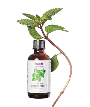 peppermint-oil_300.jpg
