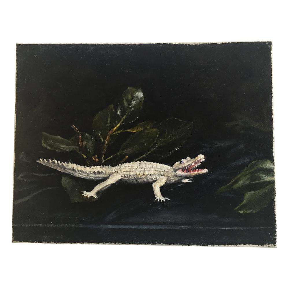 whitealligator_150.JPG