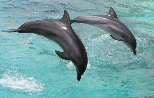 dolphin-boat.jpg