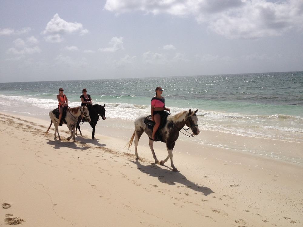 beachhorses2.jpg