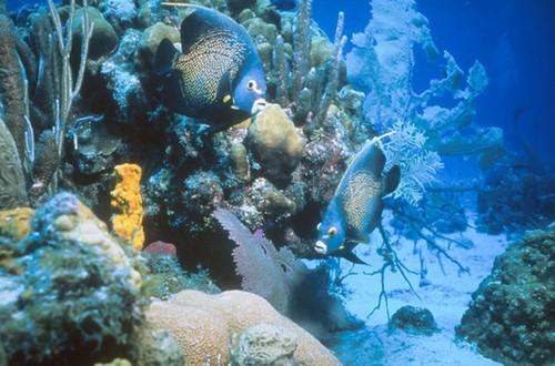 half-moon-cay-snorkel-by-boat-half-moon-cay-the-bahamas-l.jpg