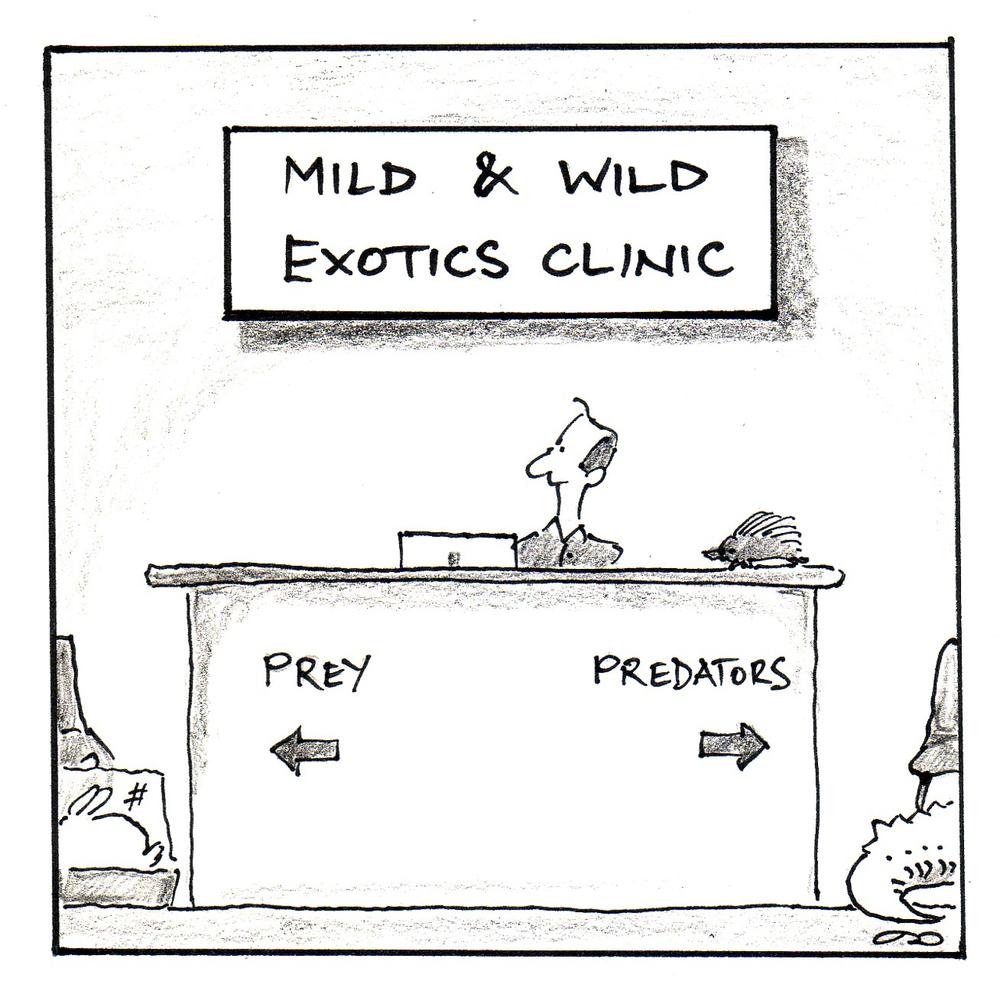 Cartoon courtesy Dr Robert Johnson