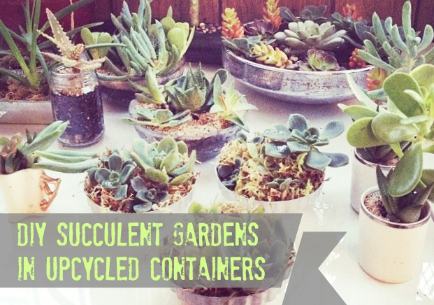 Come learn why succulent gardens are the best thing ever, even for folks without green thumbs!