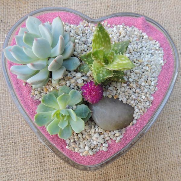 Succulent-valentine-Medium.jpg