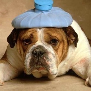#sorryforanyinconvenience, we are closed today, due to a bad case of food poisoning.  we will see you wednesday and hope you have a wonderful beginning to your week.  #sf #sanfrancisco #sickday  #foodpoisoningsucks #butthiscutedogmakesitalittlebitbetter