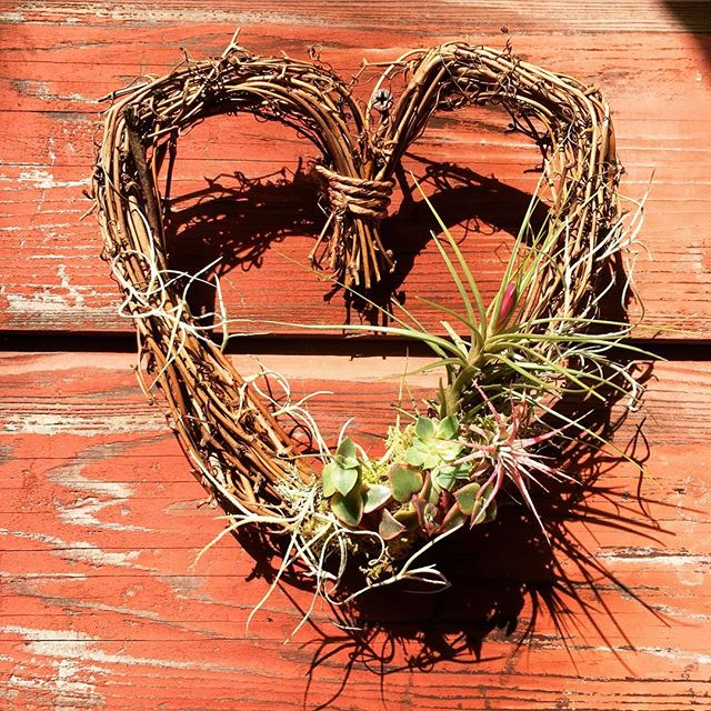 Valentine's Day is around the corner. Check out these adorable heart shaped wreaths by @easygrowindesigns.  #sflocal #localmade #wreaths  #valentinesgift #airplants #buylocal #buyhandmade #heart #easygrowindesigns