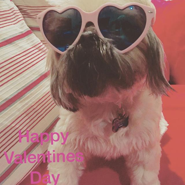 we hope everyone had a most loverly #heartday!  #tokitheshihtzuh also sends her love! #valentinesday #happyheartday #sf #sanfrancisco