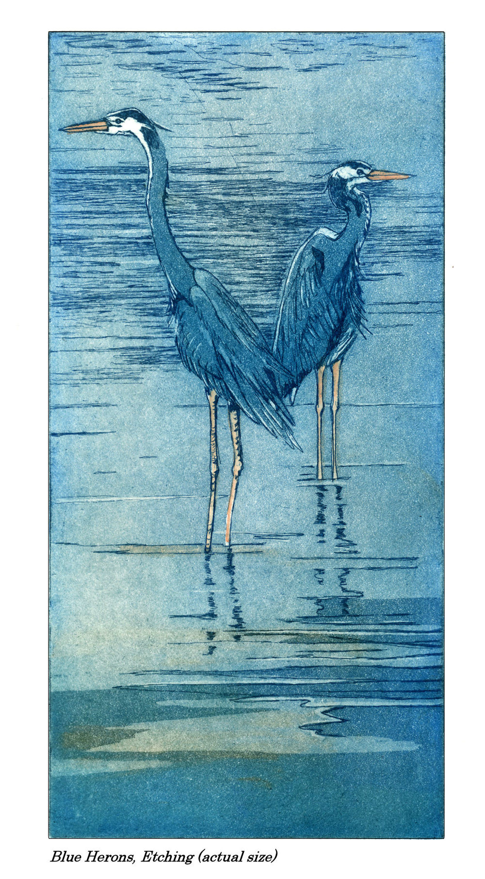 Blue Herons, etching and aquatint