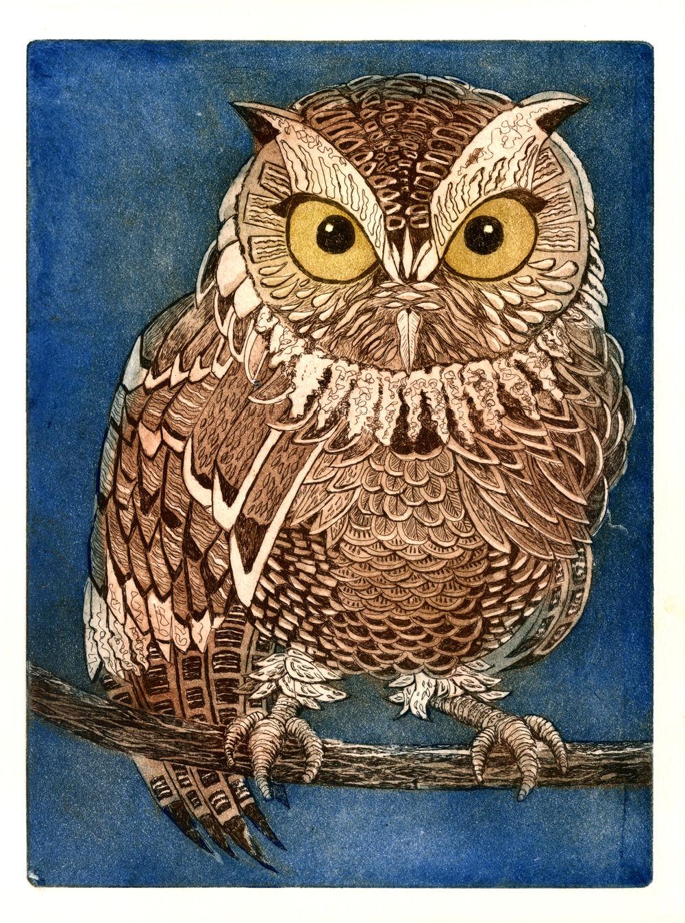 Screech Owl, etching