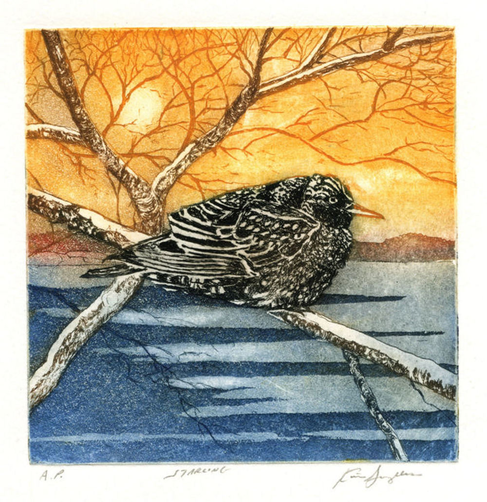 Starling, etching and aquatint