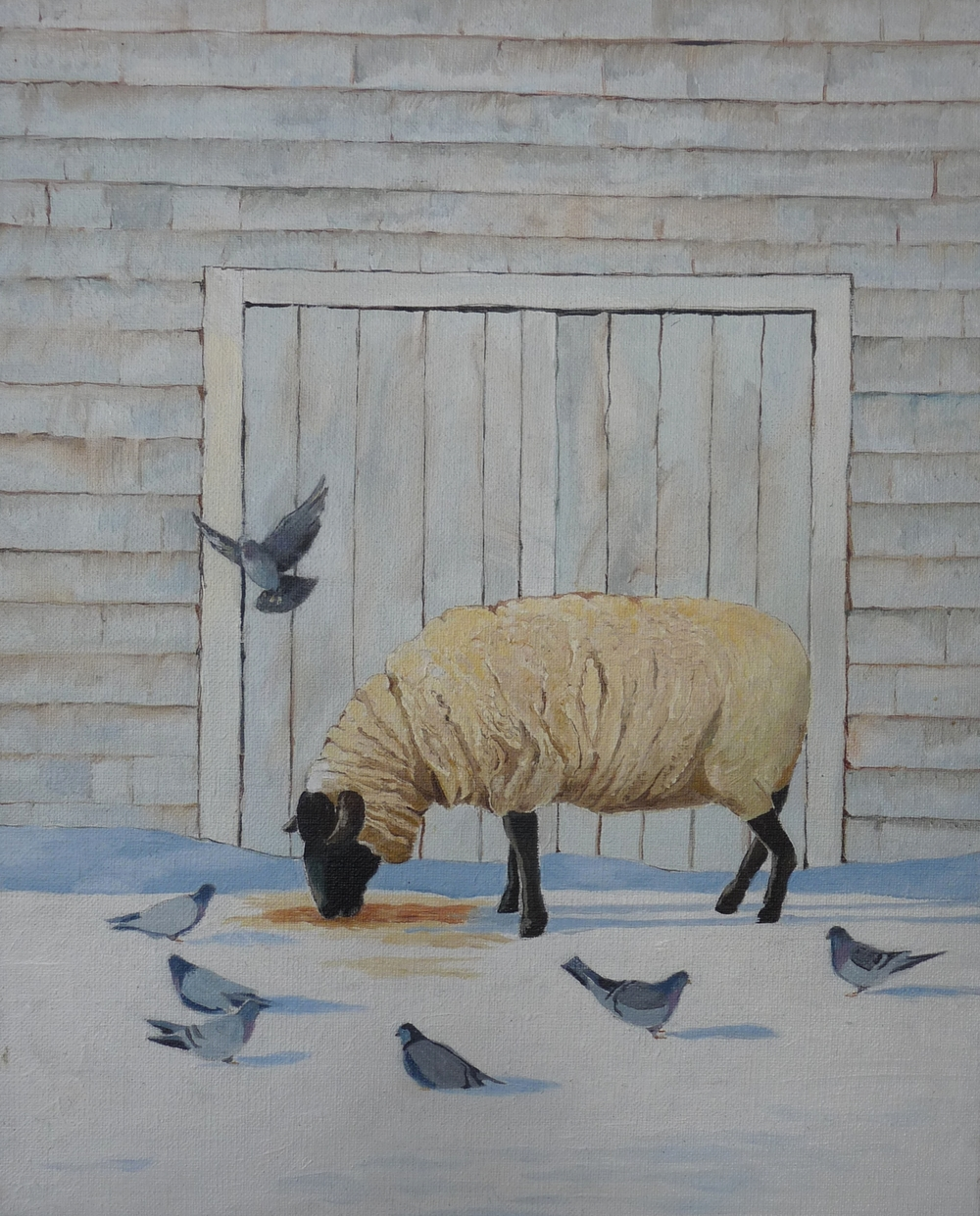 sheep by shed