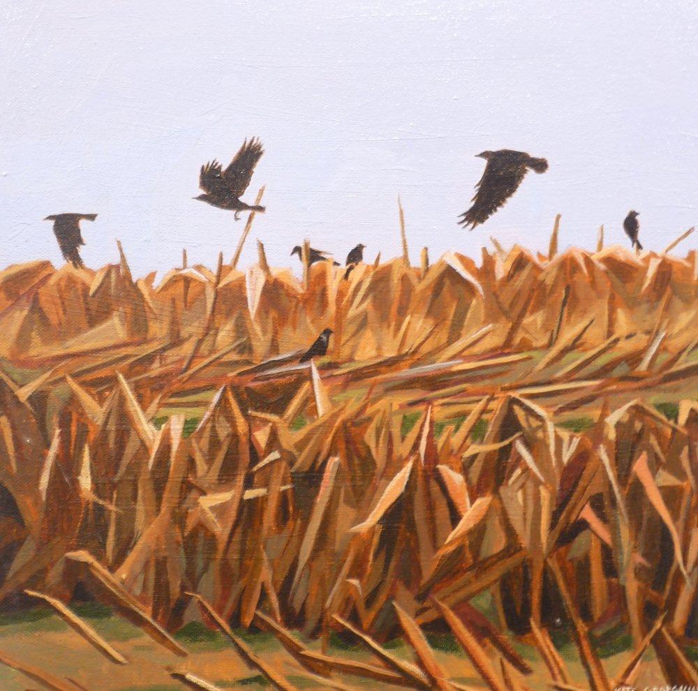 "Crows in Corn Field, acrylic 12"" x 12"""