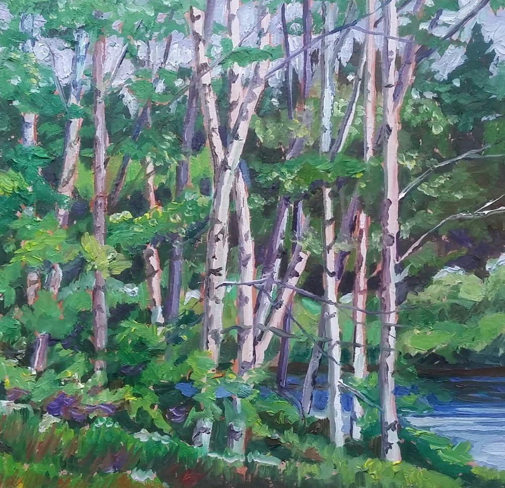 birch trees, by the south river