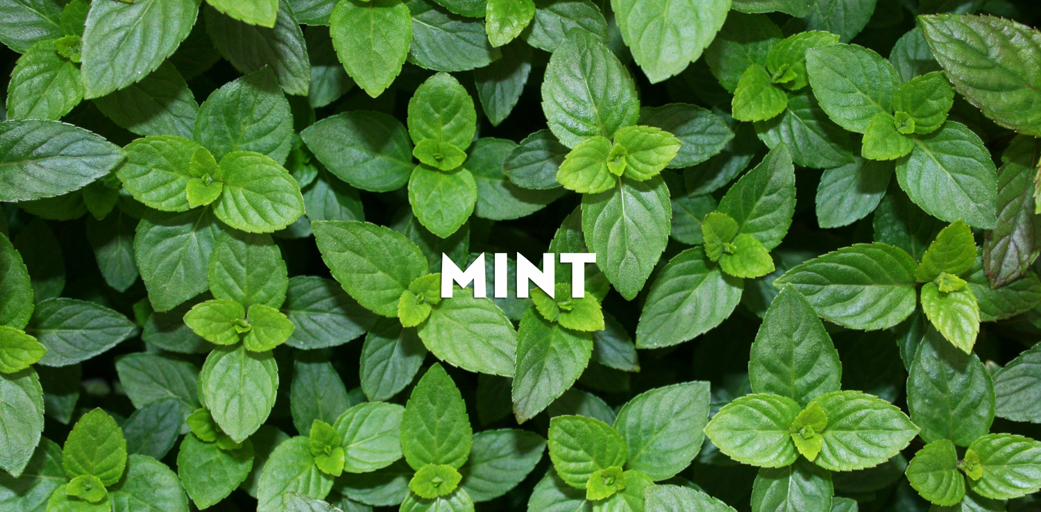 mint minto island growers