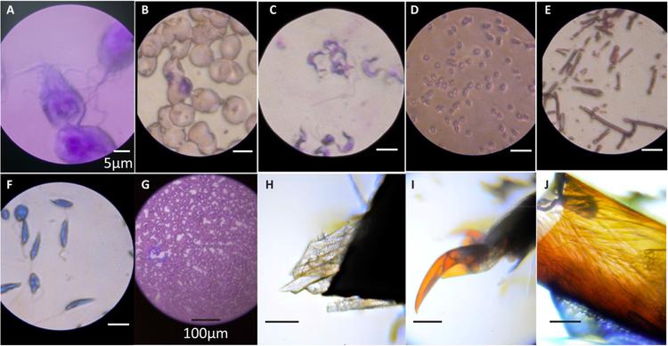 Foldscope captured images