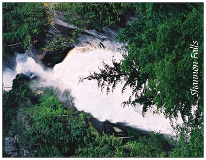 7. Shannon Falls & trees