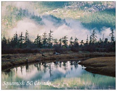 9. Misty Estuary