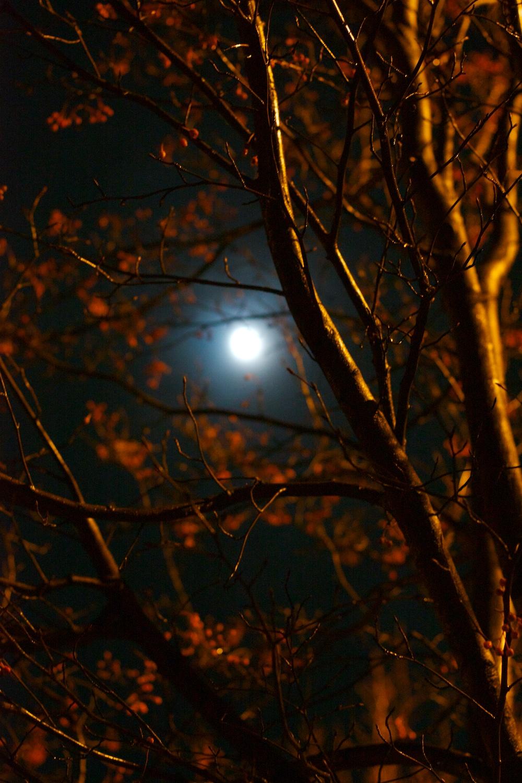 2Gale Straub Night.jpg