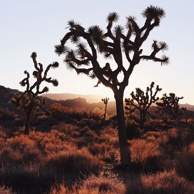 Are you a creative looking for a beautiful place to retreat? Apply for a free creative residency at @casajoshuatree for Aug 1 - 7. Work on your projects and soak up Joshua tree. The host is a friend of ours and an artist herself. Link in @casajoshuatree profile. Applications close July 1. Good luck! | 📷 @galestraub #sheexplores