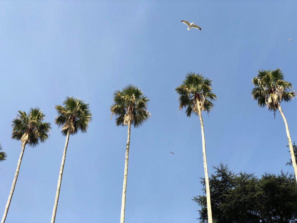porto palms by ross farley.jpg