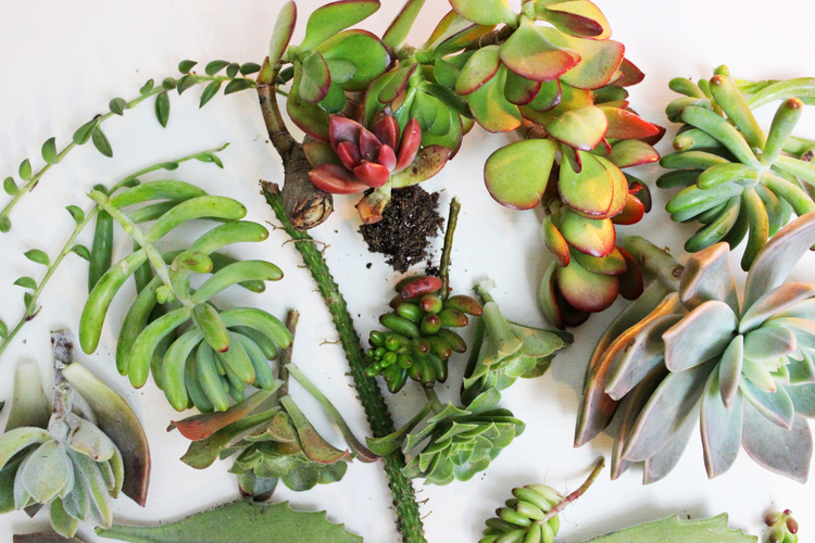 Succulents.jpeg