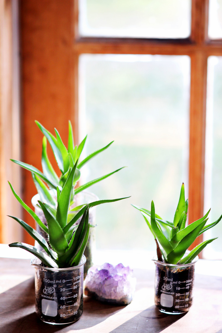 Beaker Planters \ Most Popular In January
