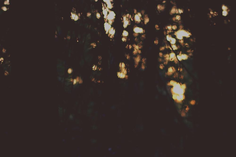 wild spirit 47.jpg