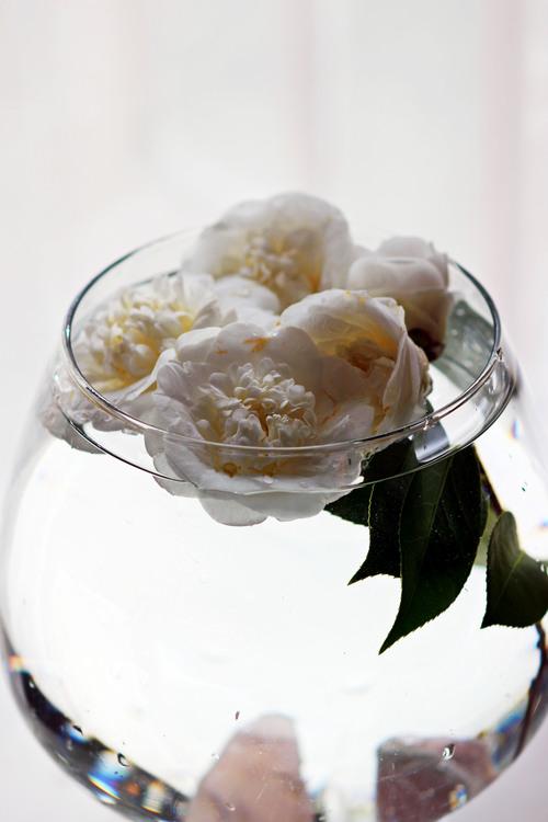 Floating Camellia Arrangement | Most Popular in June