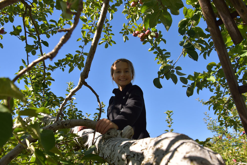 EL_Apple_Picking_2016_013.jpg